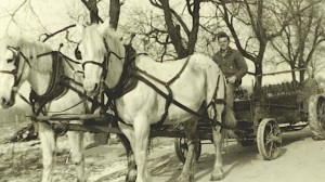 Horse Powered Manure Spreader