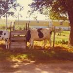 cowstrailer